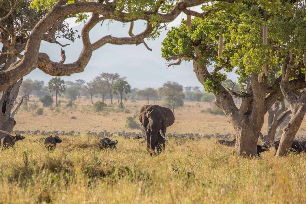 Kidepo-Wildlife-Bliss-Safari-Day-2